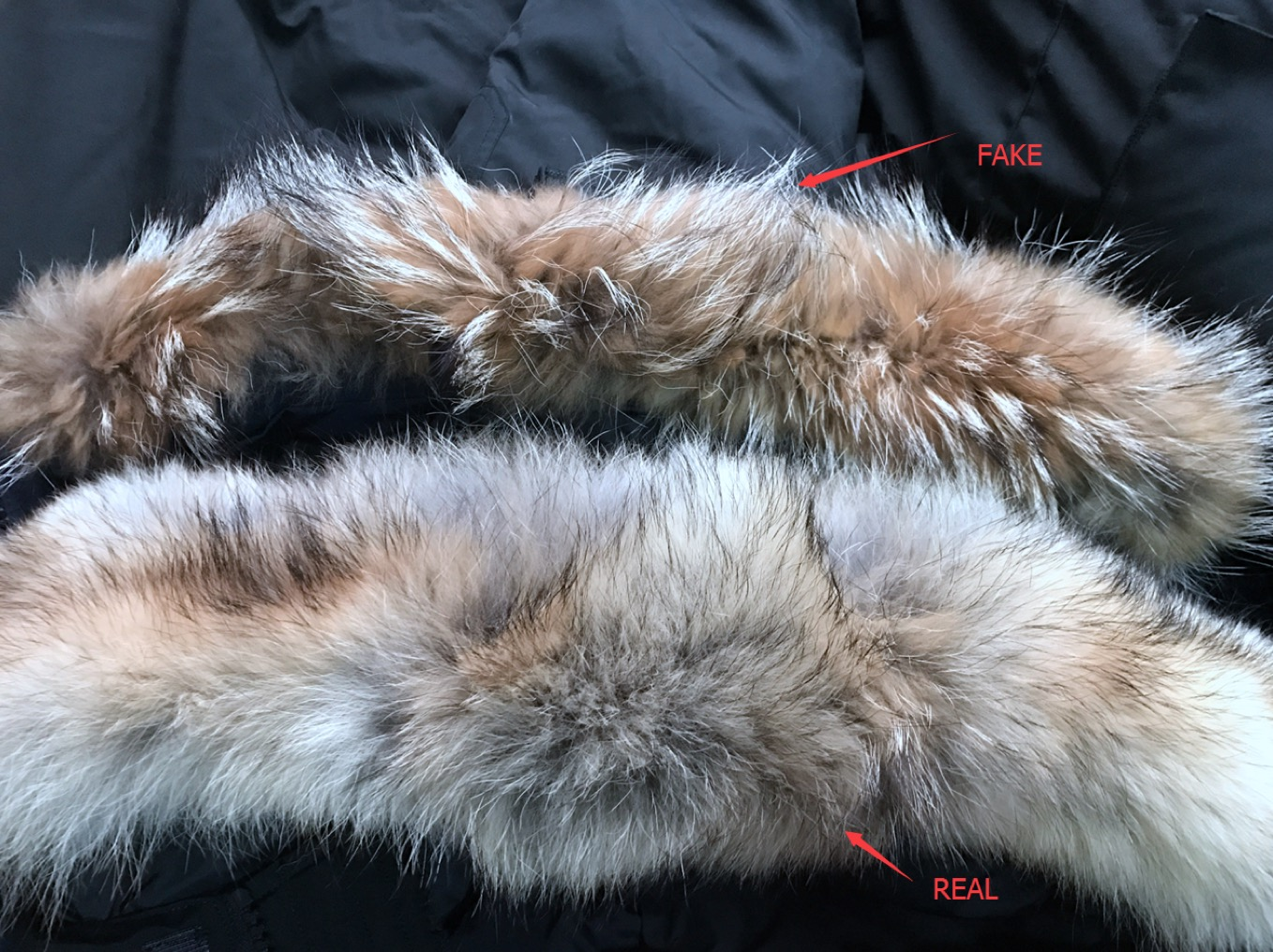 canada goose and real fur