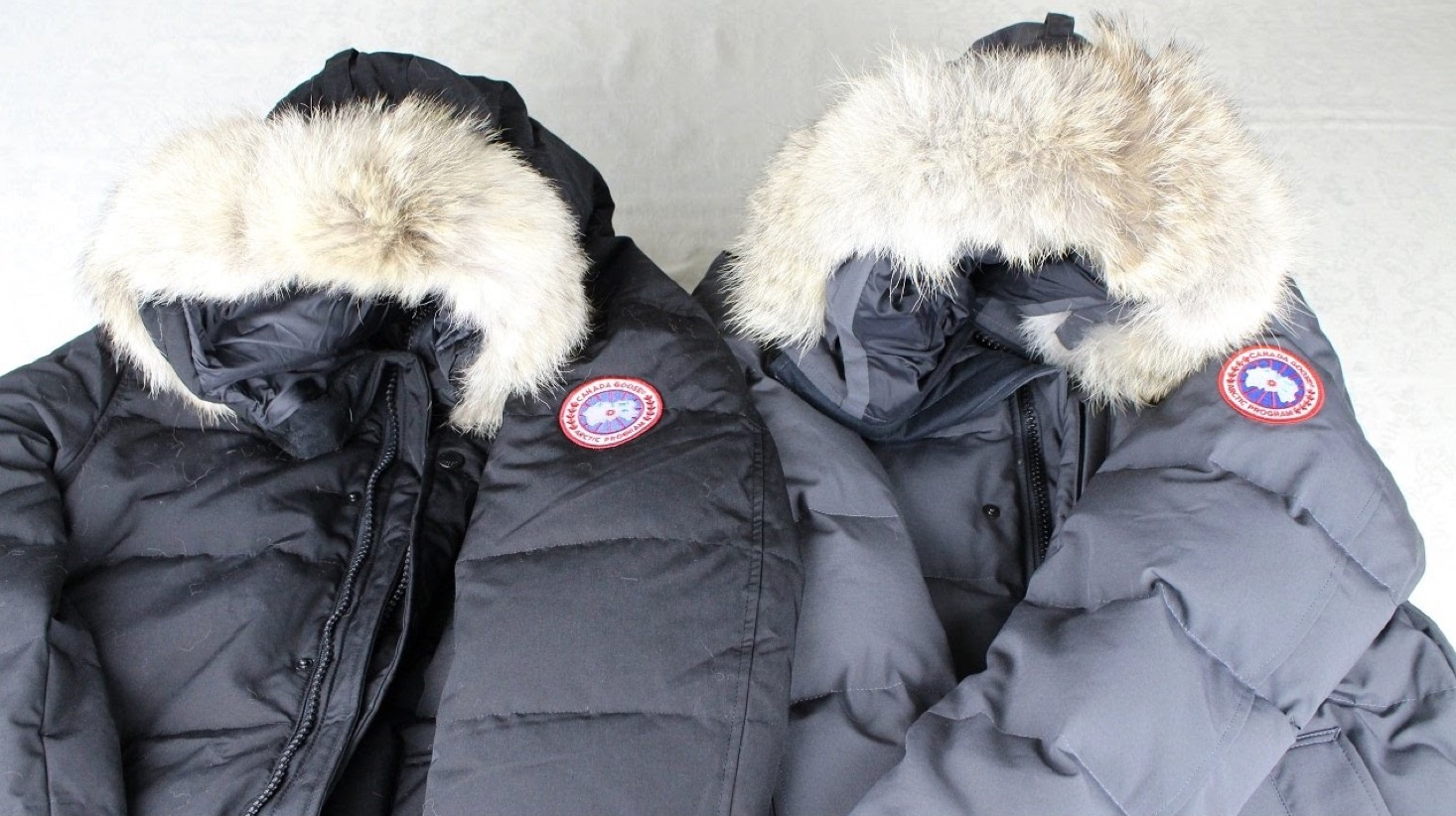 canada goose fur color